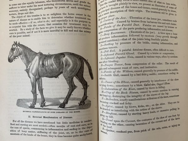 The illustrated Stock Doctor and Live-Stock Encyclopaedia - 1882